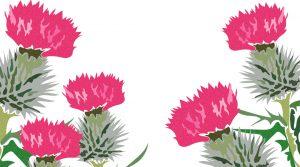 Tulpen aus der Pappschachtel…